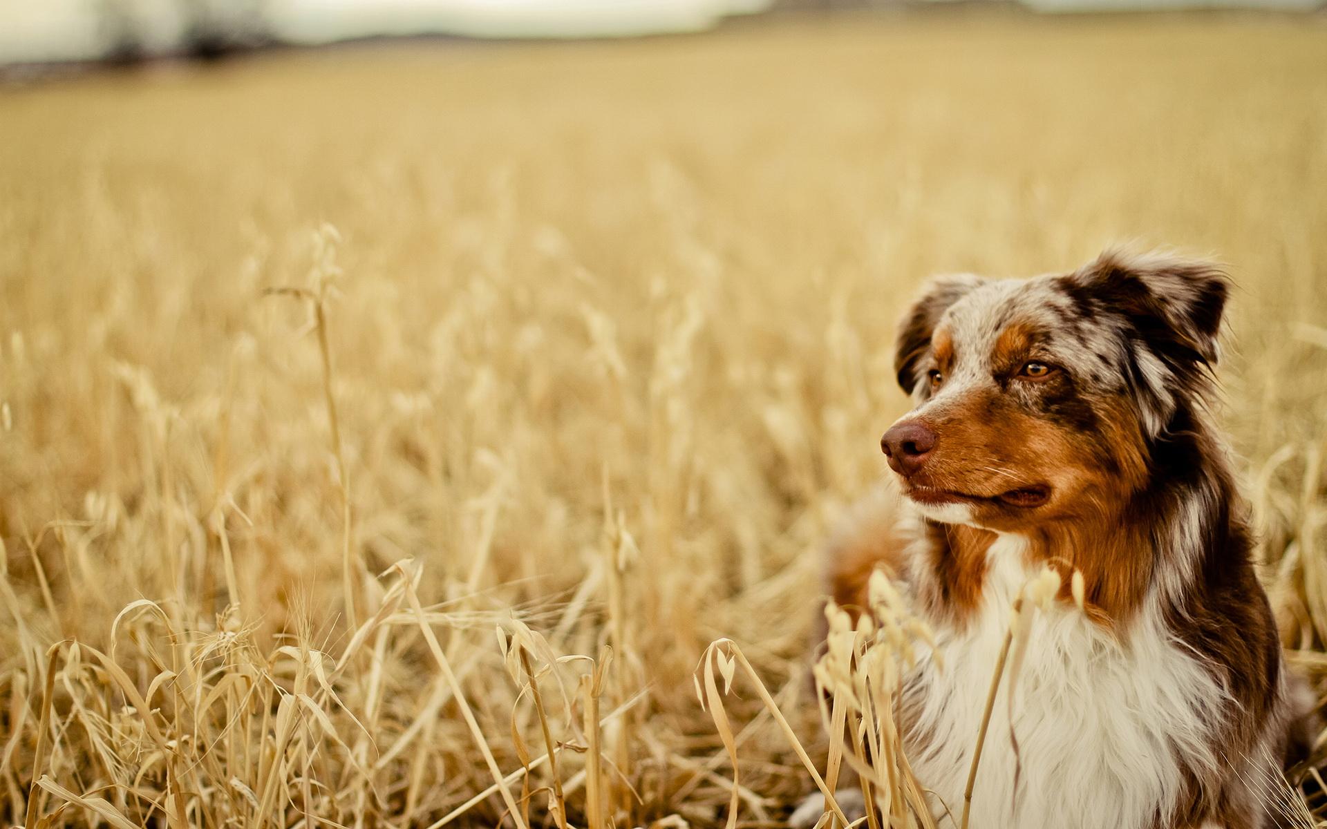 hondenoppas professionele hondenppas in huiselijke kring On hondenoppas