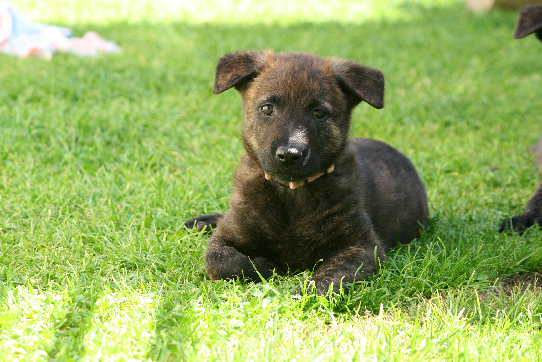 Wil je ook (weer) plezier beleven aan jouw hond?Unieke puppycursus