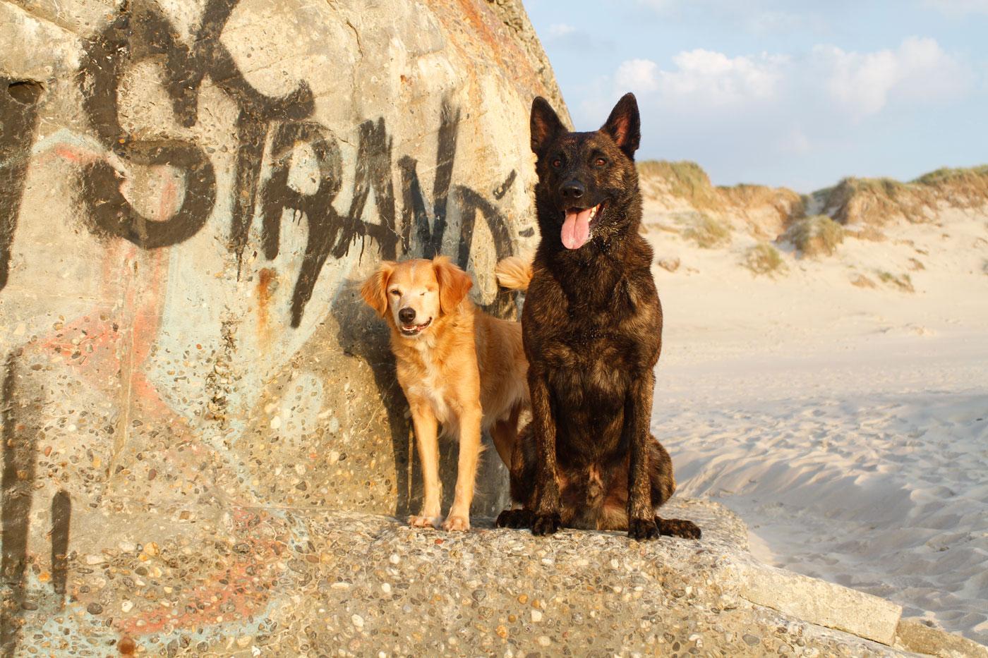 Wil je ook (weer) plezier beleven aan jouw hond?Gedragstherapie